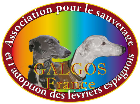 Forum Privé GALGOS France