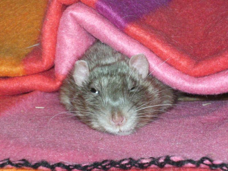 Couleur d'un raton Pict5820