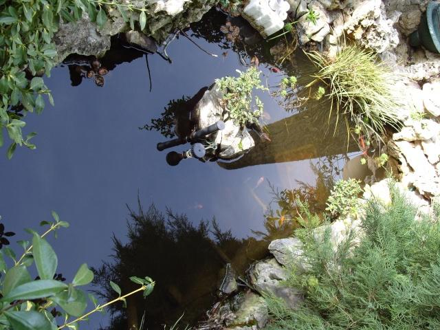 Le bassin et sa rocaille S1050219