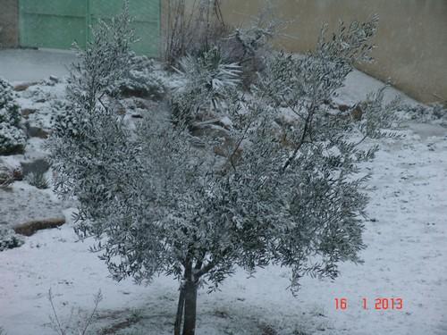 vos ambiances hivernales !!! c'est parti !! - Page 3 Dsc01918