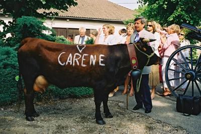 Carene1411 3810