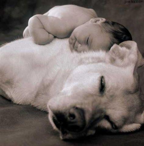 Sobre los perros y las personas… Dogrug11