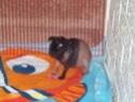 Here are my Babies!!! 2008_013