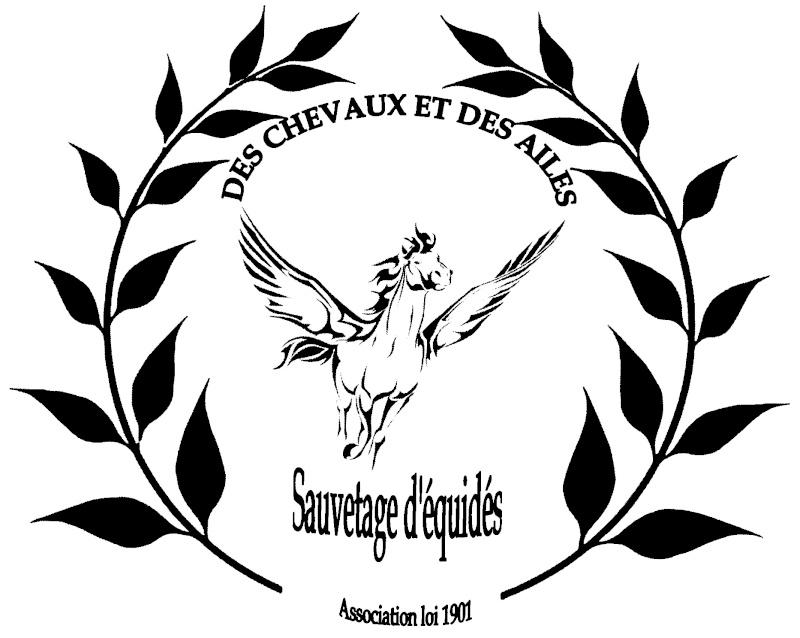 DES CHEVAUX ET DES AILES - Sauvetage d'équidés 2009-126