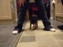 New dog pics Dscf0111