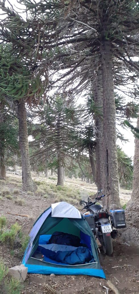 El domianr se fue a Ushuaia Domina15