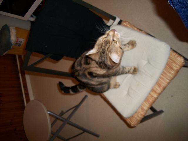 Donne jeune chat mâle 100_0111