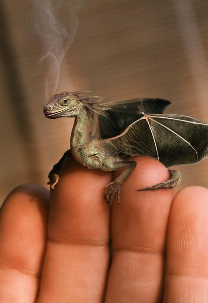 Les Dragons Baby_d10