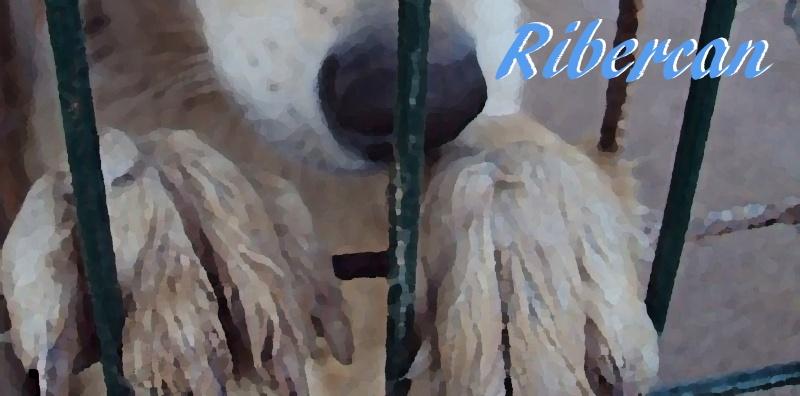 Ribercan