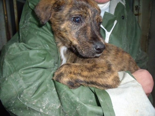 urgence adoption chiot 2 mois Chiot10