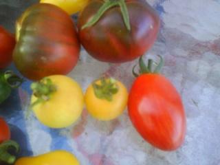 Tomates Dsc00013