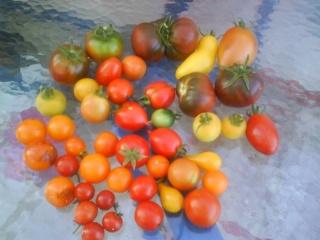 Tomates Dsc00015