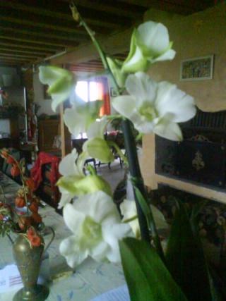 orchidees Dsc00912