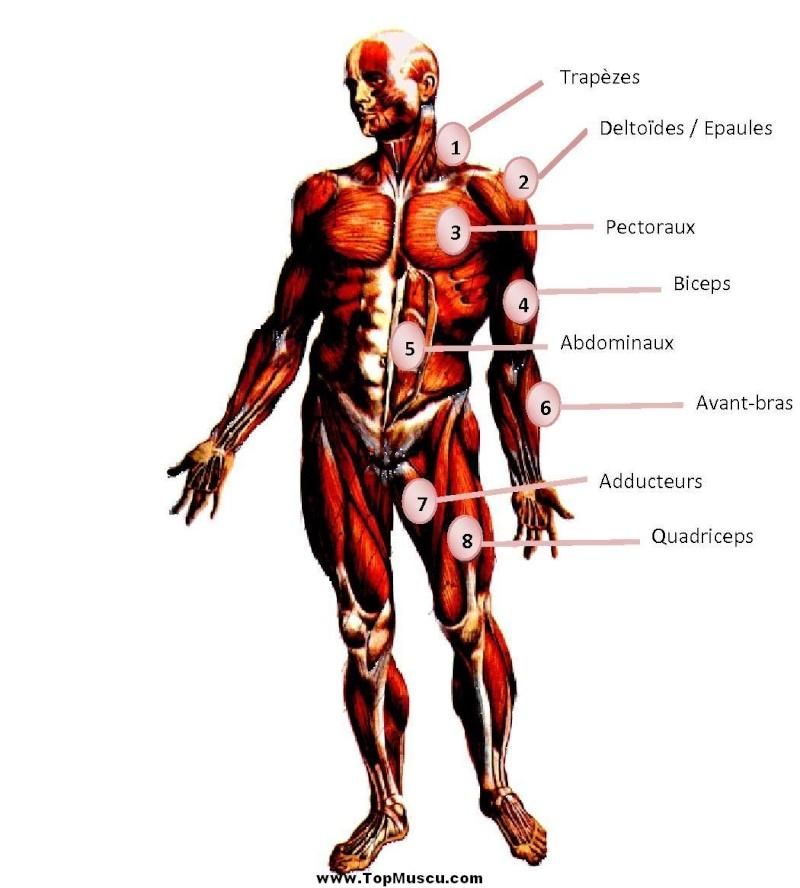 Semaine 1 présentation Anatom10