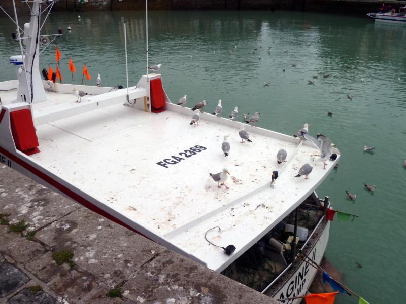 [VIE DES PORTS] Quelques bateaux de pêche (sur nos côtes Françaises) - Page 10 11814_10