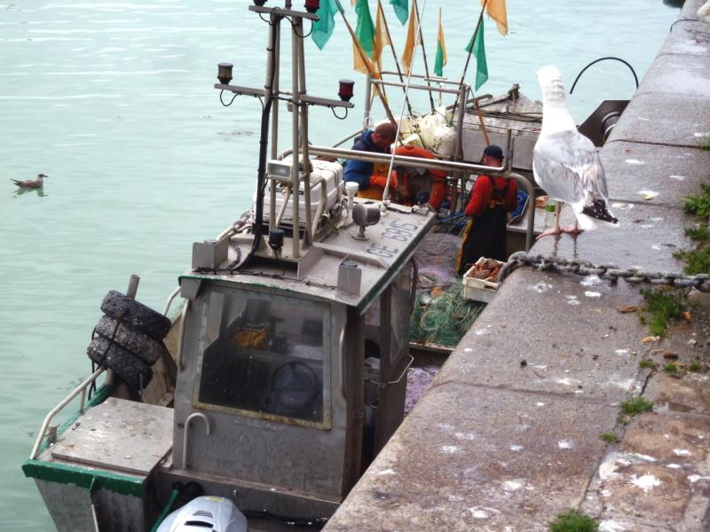 [VIE DES PORTS] Quelques bateaux de pêche (sur nos côtes Françaises) - Page 10 11818_10