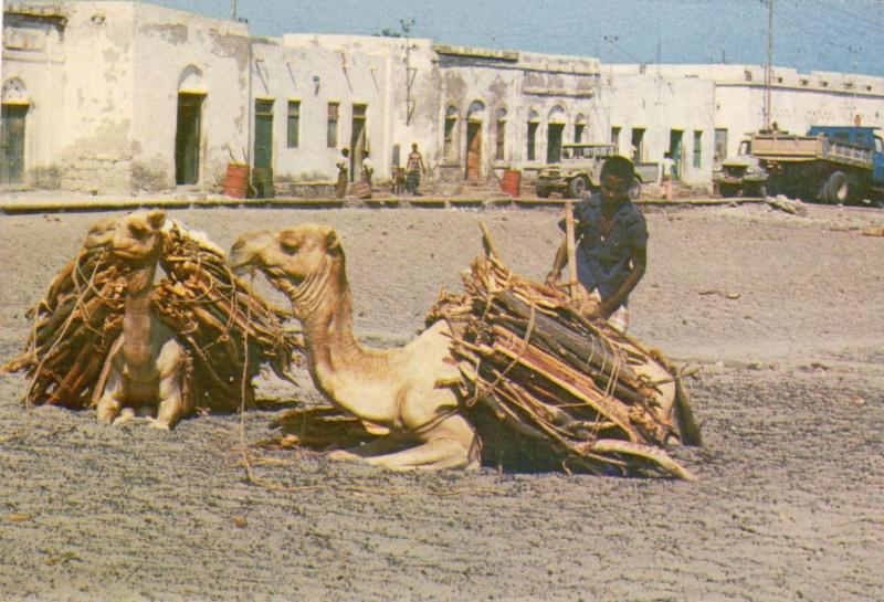[Campagne] DJIBOUTI - TOME 1 - Page 26 Djibou24