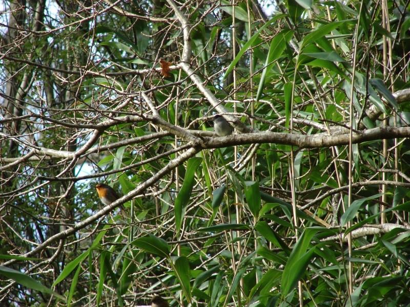 Identification oiseaux Dsc08511
