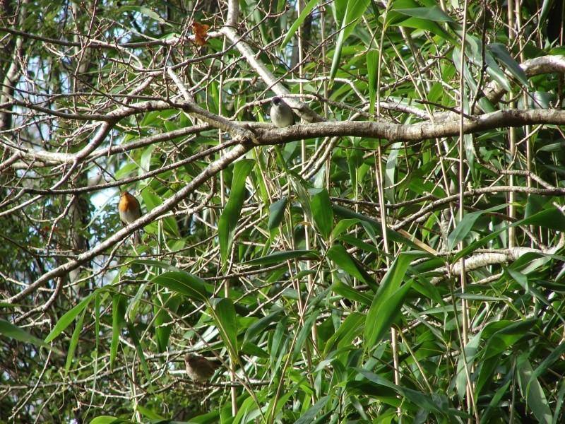 Identification oiseaux Dsc08512