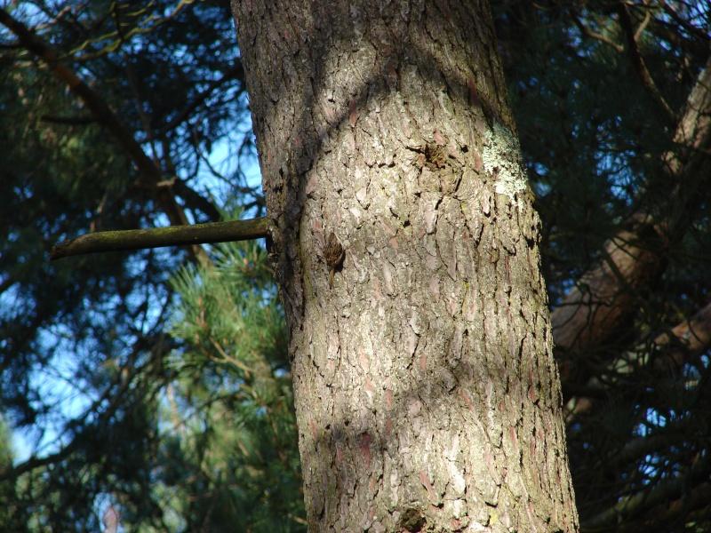Identification oiseaux Grimpe10