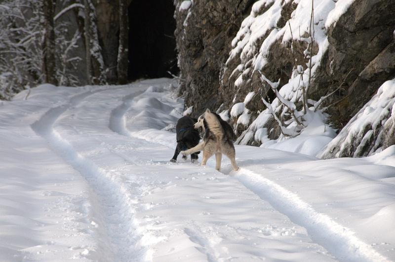 Andrea, siberian hushky,11 ans (58)   DECEDEE - Page 3 Andrea10