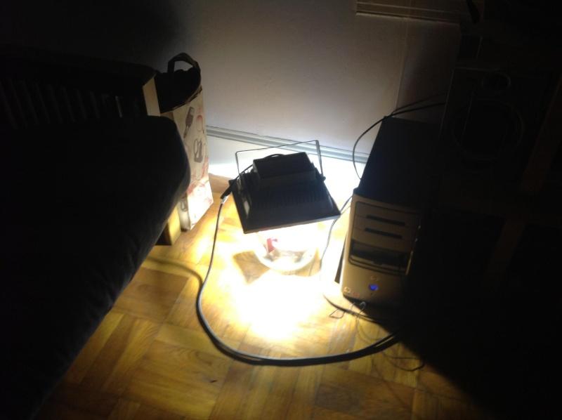 Indoor tropical LED experiment Set111