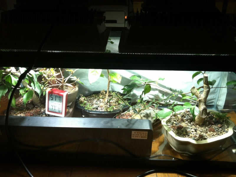Indoor tropical LED experiment Set410