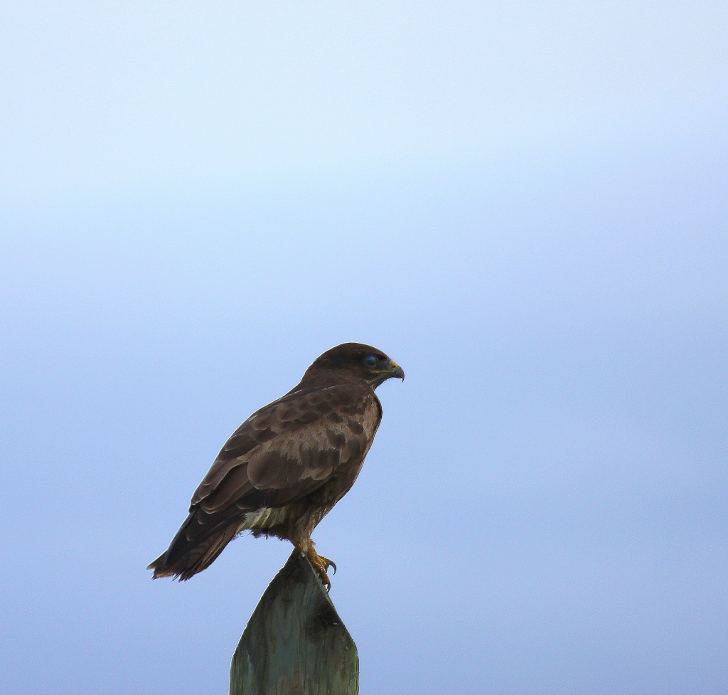 Buse variable Buse10