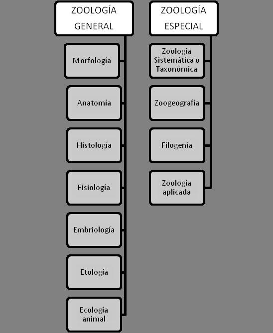 Aula Virtual Criptozoología Imagen17
