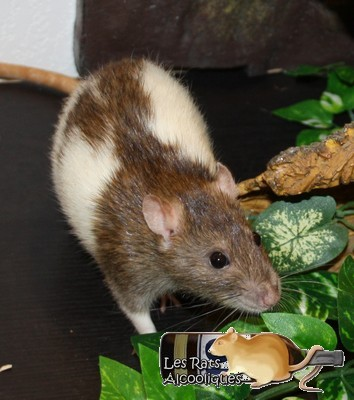 Les Rats Alcooliques - Cuvée 2013 Img_4110