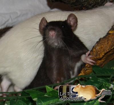 Les Rats Alcooliques - Cuvée 2013 Img_4411