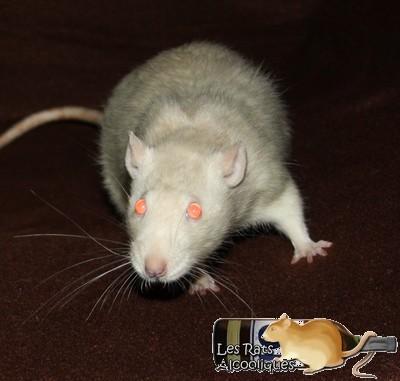 Les Rats Alcooliques - Cuvée 2013 Img_4515