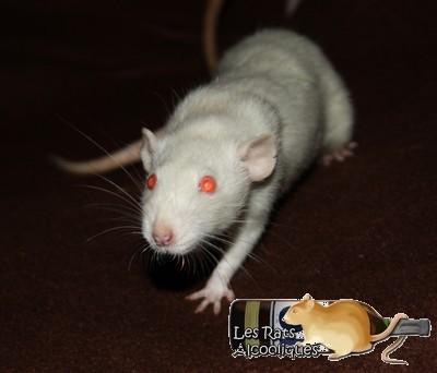 Les Rats Alcooliques - Cuvée 2013 Img_4516