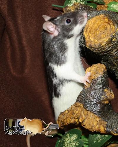 Les Rats Alcooliques - Cuvée 2013 Img_4612