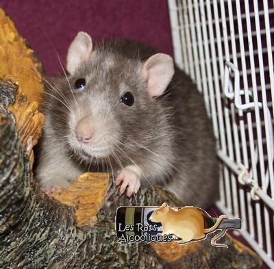 Les Rats Alcooliques - Cuvée 2013 Img_5111