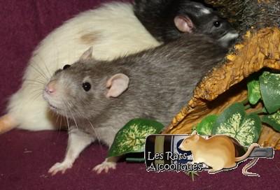 Les Rats Alcooliques - Cuvée 2013 Img_5112