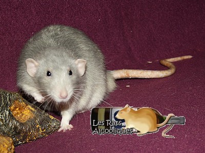 Les Rats Alcooliques - Cuvée 2013 Img_5113