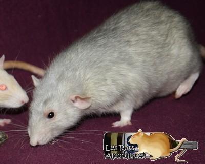 Les Rats Alcooliques - Cuvée 2013 Img_5114