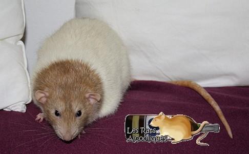 Les Rats Alcooliques - Cuvée 2013 Img_5115