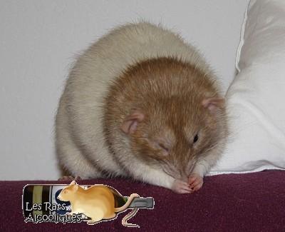 Les Rats Alcooliques - Cuvée 2013 Img_5116