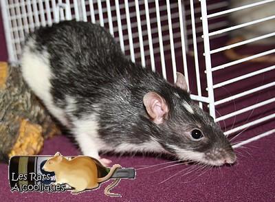 Les Rats Alcooliques - Cuvée 2013 Img_5117