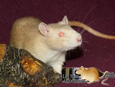 Les Rats Alcooliques - Cuvée 2013 Img_5119