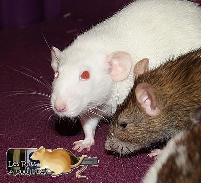 Les Rats Alcooliques - Cuvée 2013 Img_5120