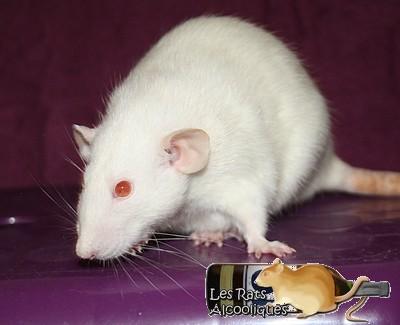 Les Rats Alcooliques - Cuvée 2013 Img_5121