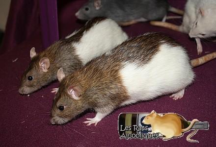 Les Rats Alcooliques - Cuvée 2013 Img_5122
