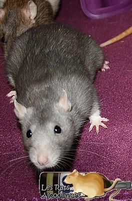 Les Rats Alcooliques - Cuvée 2013 Img_5123