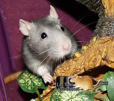 Les Rats Alcooliques - Cuvée 2013 Img_5124