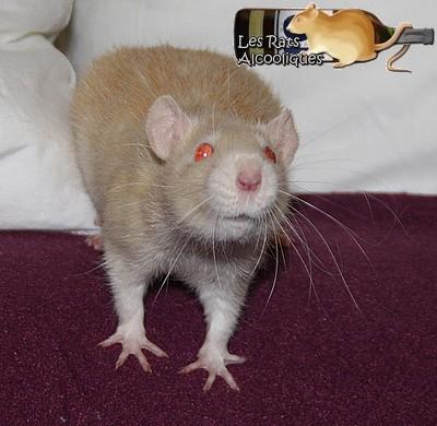 Les Rats Alcooliques - Cuvée 2013 Img_5126