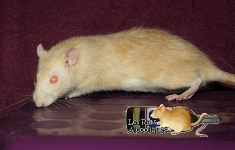Les Rats Alcooliques - Cuvée 2013 Img_5127