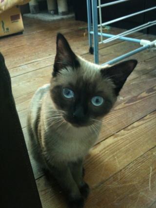 2 nouveaux chatons à la maison + photos d'Eden Les_ch14